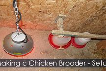 Incubating and Hatching Chicken Eggs - Procedures / Hatching chicken eggs tutorial with detailed instructions and gallery of photos. All about: egg candler, automatic air incubator or ciculated air incubator, egg turner, incubator settings, homemade brooder and hatching calendar. Care for newborn chicks.