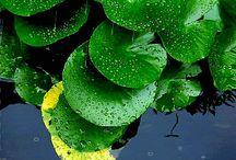 Rain- dew drops / Vizes csodák..