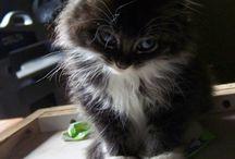 Cute Pets / by Jenny Baker