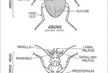 Biodiversity in Insects / This is an educational resource to accompany: www.sites.google.com/site/nectarpointnetwork