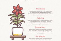 Plants for Indoors