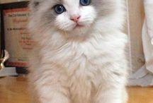 """Cat """"__"""""""