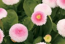 Perennial Plants / Perennial flower and foliage plants for the garden, plus related tips. / by Horticulture Magazine