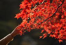 Autumn / by Piccolini Barilla