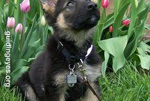 puppyes