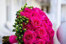 Rosas/ Rose
