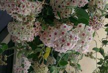 fiori particolari.