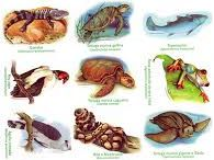 fauna de la costa del perú