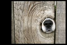 """mUsT LoVe DoGs / """"Dogs are not our whole life, but they make our lives whole.""""   -Roger Caras / by CarolLynn Gregson"""