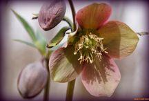 Wild flowers / Wild flowers