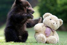 cute animals / by Linda Jankowski