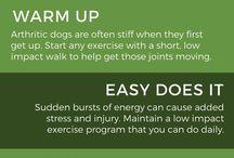 Honden, gezondheid & verzorging