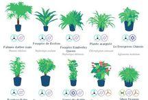 plantes d' intérieur