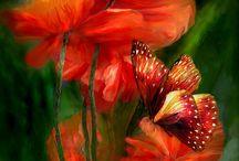 Carol cavalaris bloemen