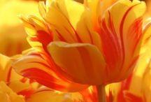 Colors: orange