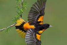 Oiseaux / Photos de beaux oiseaux