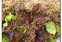 Plants & Garden:- Container Pot Ideas