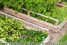 Gardening - Outdoor Space / Gardening - Outdoor Space