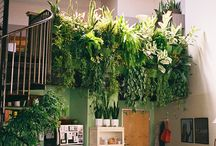 Home Decor: Greenery / Beautiful home decor featuring greenery, including tips on maintenance.