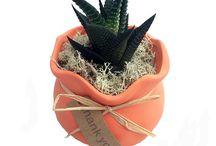 Grateful Life Planters / Grateful Life Planter with Live Plants