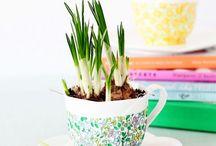 Pflanzen & Greenery / Alles über Blumen & Pflanzen und wie man sie als Dekoration verwenden kann.