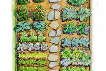 Kiskertem, zöldségek