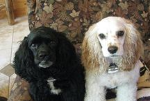 How cute are our owners pets!? / Our owners other half....their pets! How cute are these guys!?