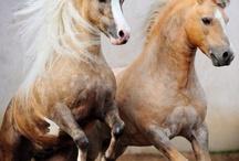 Horses / by Sarah Mc