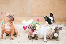 Pets and Weddings / Pets and weddings? Why not! Include your cat, dog - any animal in your wedding. Checkout some fun inspiration and attire.
