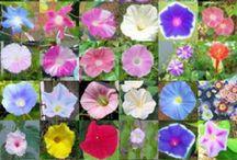διαφορα λουλουδια