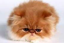 kitty pay cs