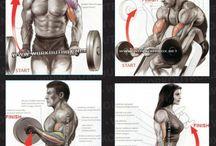 Biceps - Arm