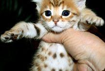 Cute / by Hilary Bunch