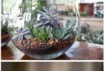 *plants plants plants*