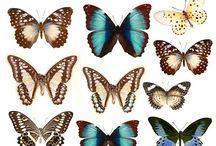 бабочки гладь рисунки
