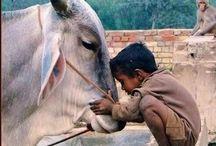 Animals & People