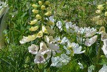 RHS Hampton Court Palace Flower Show / Letošní . ročník této výstavy byl navíc zvolen zahradnickou událostí roku 2015 společností International Garden Tourism Network.