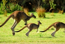 Australian Wildlife / by World Animal Protection Australia