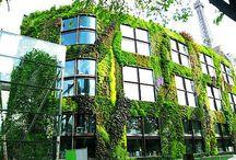 Green Walls & Vertical Gardens