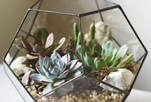 Terraniums and indoor plant ideas