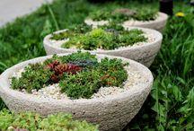 MY HYPERTUFA / moja hypertufa / Skalničky pestované v mojej Hypertufe (Succulents in my Hypertufa)