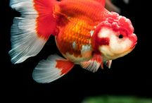 Fish fish baby