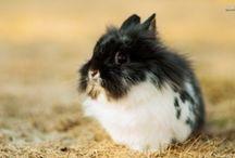 kaniner som ikke er på nettstallen