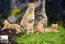 Ζωα-οικογενεια