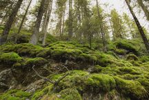 Swedish Nature Reserves