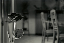 black and white still life surreal photography work
