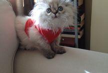 Marmişş / Dost#cat#marmelat