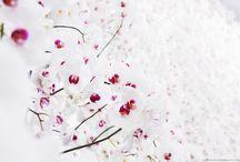 Flowers & Blossom