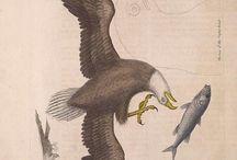 Mark Catesby - The natural history of Carolina, Florida and the Bahama Islands, Vol. 1-2 (1729-1732)