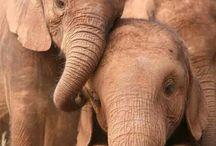 Elephants / Любимые слоны